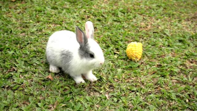 stockvideo's en b-roll-footage met leuk konijn op groen gras, conceptkonijn en pasen. - domestic animals