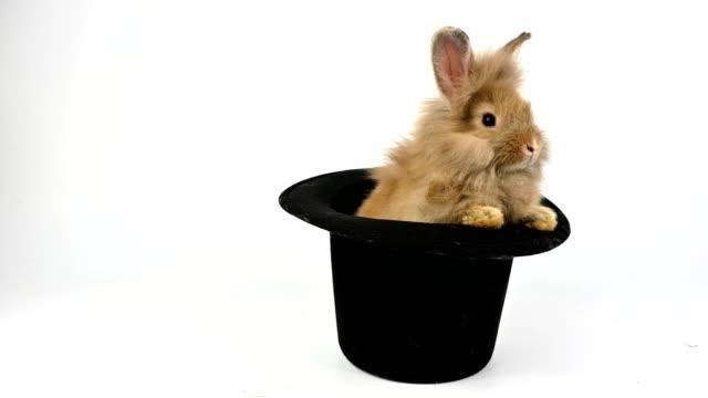 cute rabbit sitting in black hat - top hat stock videos & royalty-free footage