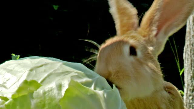 cute rabbit - rabbit animal stock videos and b-roll footage