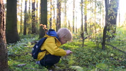 Cute schoolchild exploring nature with magnifying glass. Little boy look at the plant with magnifier.