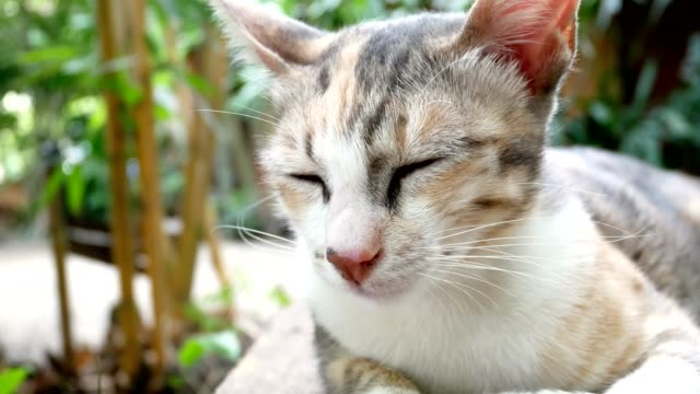 Cute sleepy cat lying on wooden bench