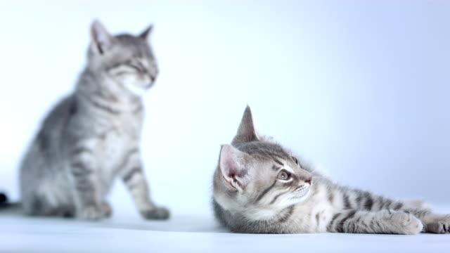 hd :かわいいスリープ kittens - 雑種のネコ点の映像素材/bロール