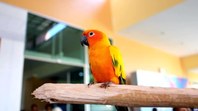 Cute sun conure parrot.
