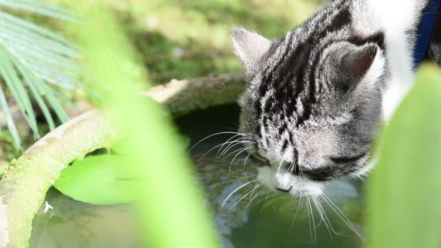 vídeos y material grabado en eventos de stock de lindo tabby gatos beber agua en estanque de loto tazón jardín verde. - posa del loto