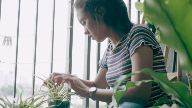 nette frau kümmert sich um ihre pflanzen-stock vdo - gärtnern stock-videos und b-roll-filmmaterial