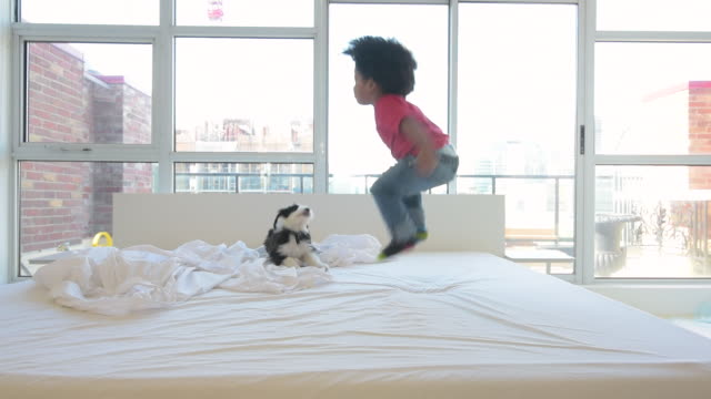 vídeos de stock, filmes e b-roll de cute young black boy jumping on bed with puppy - afro