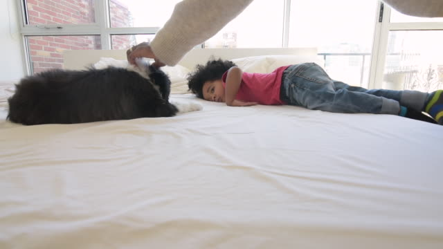 cute young black boy jumping on bed with puppy - stabilisers stock videos & royalty-free footage
