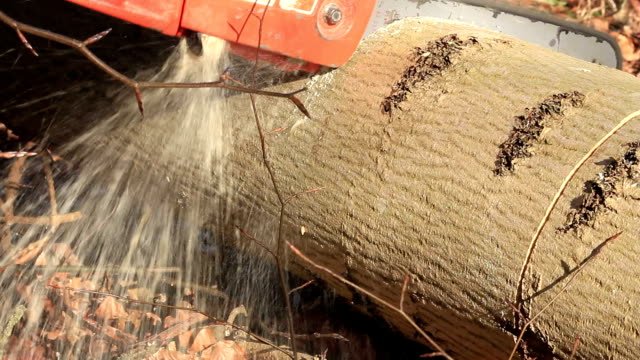 cutting a felled tree - ash tree stock videos & royalty-free footage