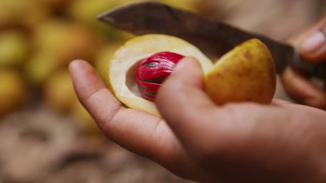 cutting a nutmeg and peeling a seed in banda island, maluku, indonesia - nutshell stock videos & royalty-free footage