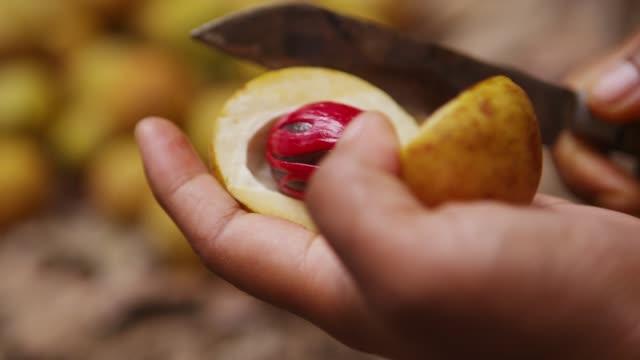 stockvideo's en b-roll-footage met cutting a nutmeg and peeling a seed in banda island, maluku, indonesia - notendop