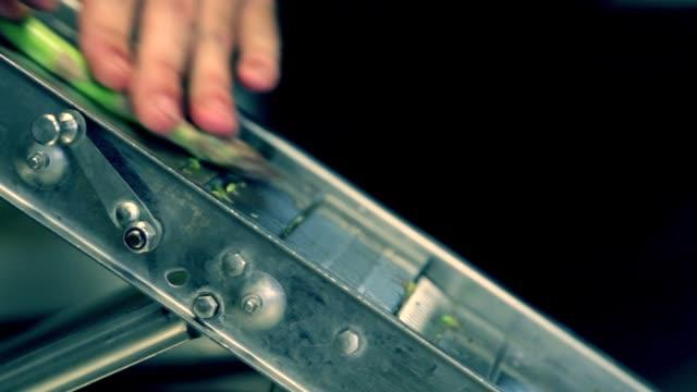 Cutting Asparagus - Cortador de espárragos