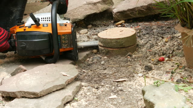 vídeos de stock, filmes e b-roll de árvore de grande corte com serra elétrica - tronco termo anatômico