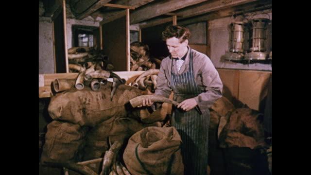 montage cutting cattle horn in united kingdom - 荒い麻布点の映像素材/bロール