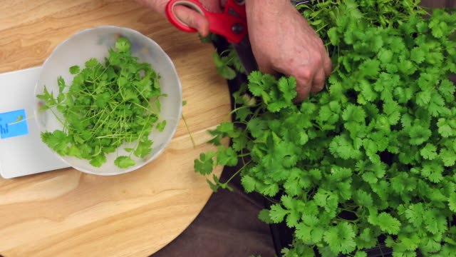 Cutting cilantro