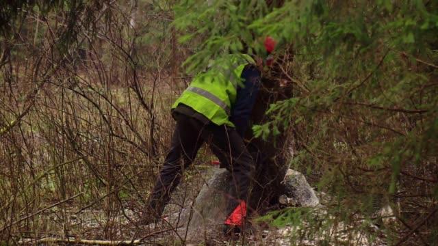 cutting down spruce - lumberjack stock videos & royalty-free footage