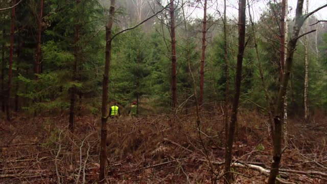 cutting down spruces - lumberjack stock videos & royalty-free footage