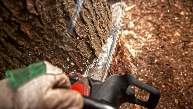 SLO MO POV Cutting into a tree with a chainsaw