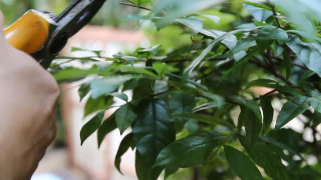 Schneiden leaf