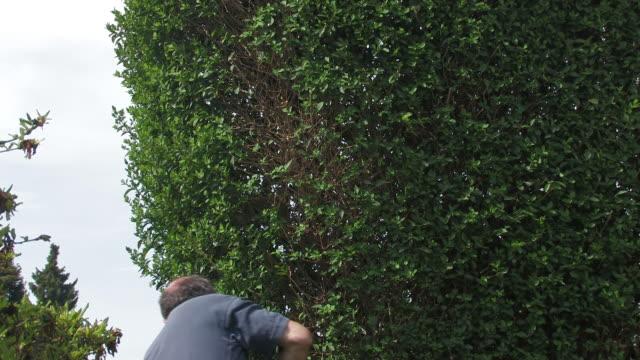 vídeos y material grabado en eventos de stock de cortar del hedge - seto