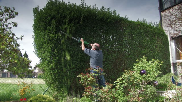 stockvideo's en b-roll-footage met cutting the hedge - struik