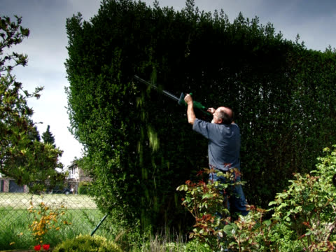 PAL: Cutting the hedge