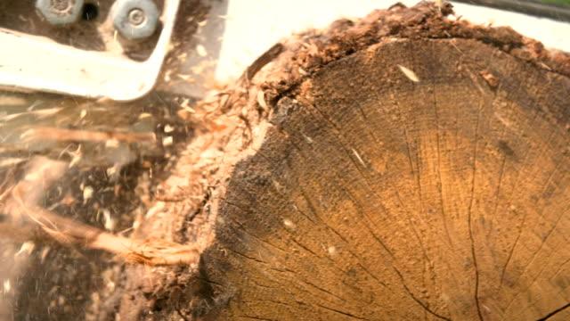 Skär genom trä med motorsåg i slow motion.