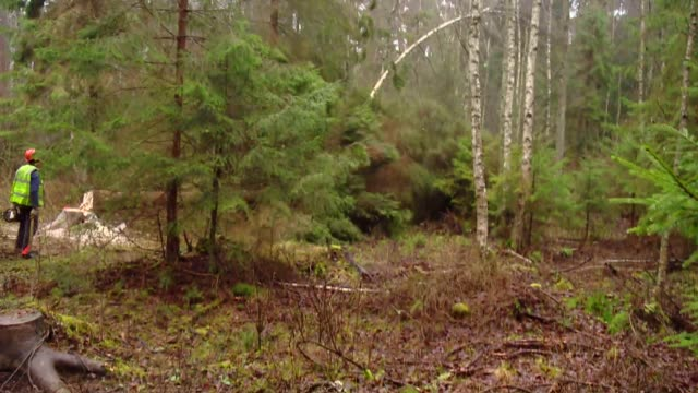 cutting trees in forest - lumberjack stock videos & royalty-free footage