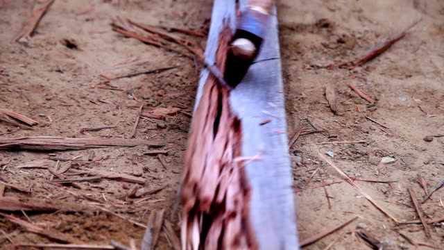 vídeos de stock, filmes e b-roll de corte de madeira  - forester