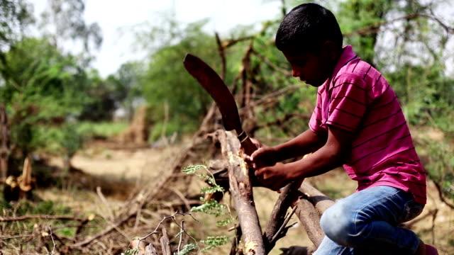 schneiden woods - schulkind nur jungen stock-videos und b-roll-filmmaterial