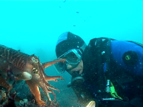 cuttle and diver swim together, ws - tauchgerät stock-videos und b-roll-filmmaterial