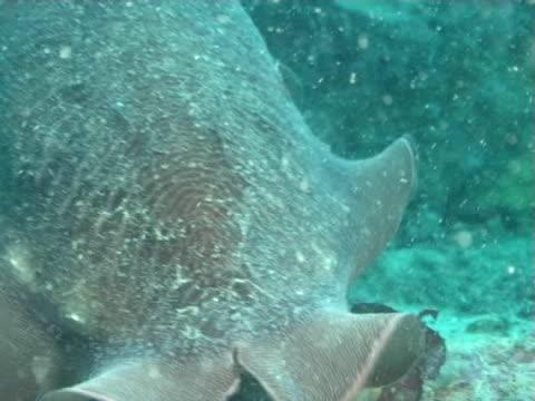 vídeos y material grabado en eventos de stock de cuttlefish head in green water, bcu - menos de diez segundos