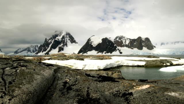stockvideo's en b-roll-footage met cuverville eiland antarctica - dierlijk gedrag