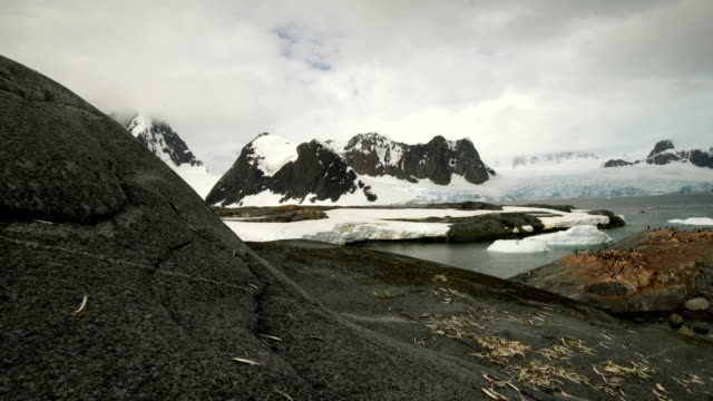 cuverville island antarctica - named wilderness area stock videos & royalty-free footage