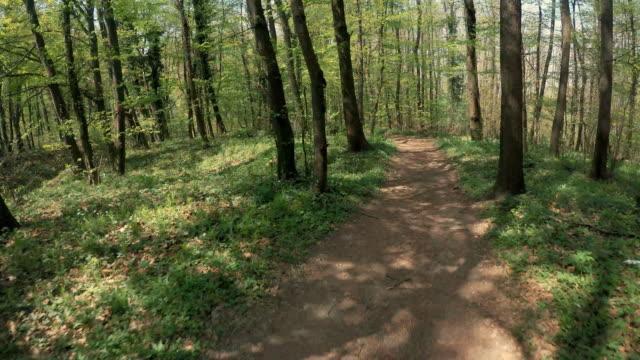 cycling the woods - bumpy stock videos & royalty-free footage