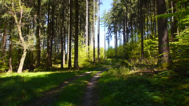 pov cycling through forest - footpath stock-videos und b-roll-filmmaterial