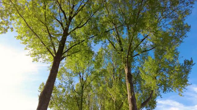 cycling under tall trees in a row - 北ホラント州点の映像素材/bロール