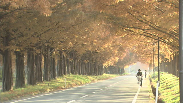 a cyclist pedals along a tree-lined road. - treelined stock videos & royalty-free footage