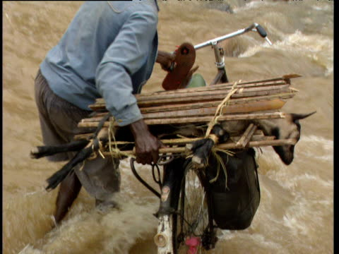 cyclist takes distressed goat across flooding river democratic republic of congo - 1993 stock-videos und b-roll-filmmaterial