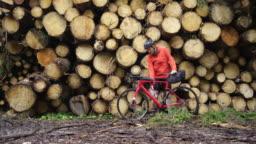 Cyclist taking a break near cut trees