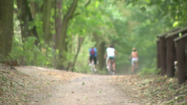 stockvideo's en b-roll-footage met cyclists in forest - plant attribute