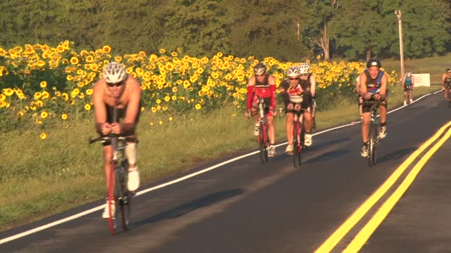 cyclists in sos triathlon pass sunflower field - new paltz ny stock videos and b-roll footage