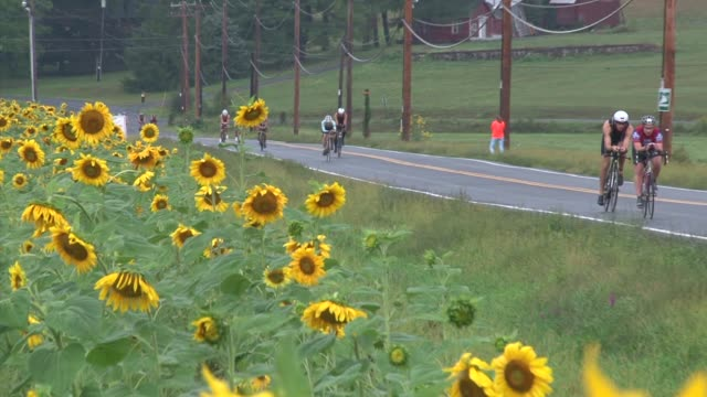 cyclists in triathlon pass sunflower field - salmini stock videos and b-roll footage