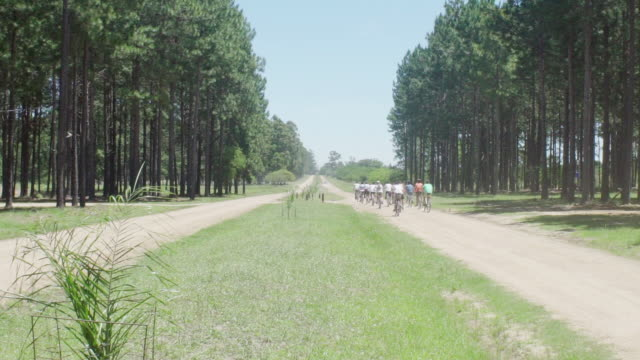 stockvideo's en b-roll-footage met cyclists riding along tree-lined path - naaldbos
