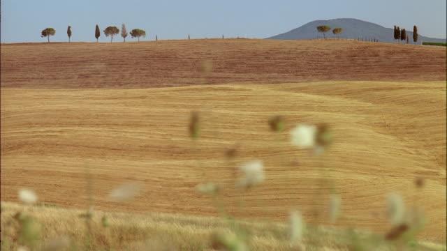 cypress and aleppo pine trees border vast golden fields near torrenieri, tuscany, italy. - toskana stock-videos und b-roll-filmmaterial