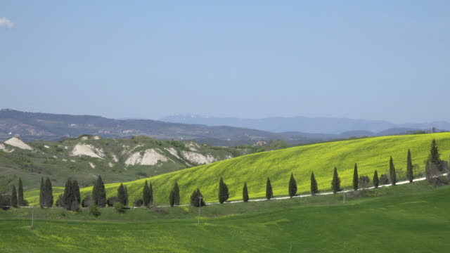 cypress avenue over tuscany hills - siena italy stock videos and b-roll footage