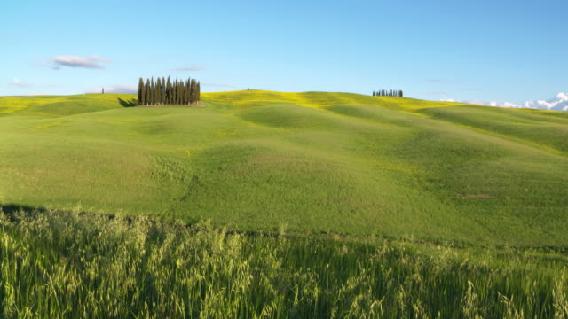 cypress grove near san quirico d´orcia. tuscany, italy. - toskana stock-videos und b-roll-filmmaterial