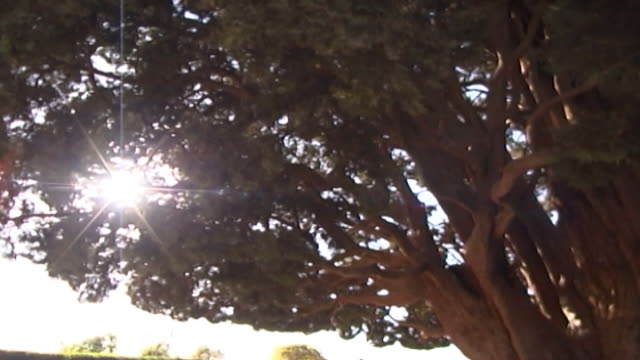 cypress of abarkuh. pan-right of the four thousand years old tree. legend has it that it was planted by the zoroastrian prophet zoroaster. - yazd province stock videos & royalty-free footage