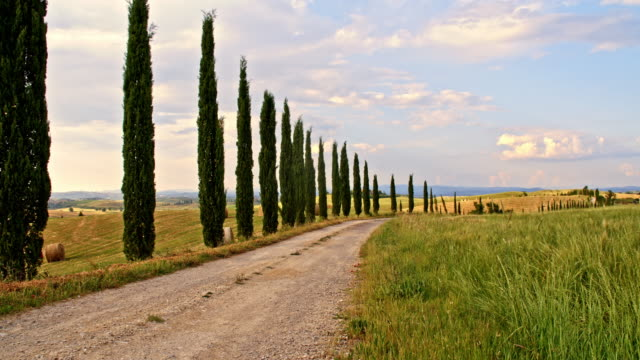 ds cypress tree lined road in tuscan countryside - tuscany stock videos & royalty-free footage