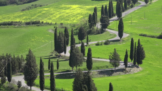 TU / Cypress tree lined winding road in tuscany hills