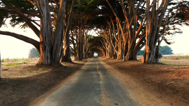 cypress tree tunnel with straight road in california. - alley stock videos & royalty-free footage